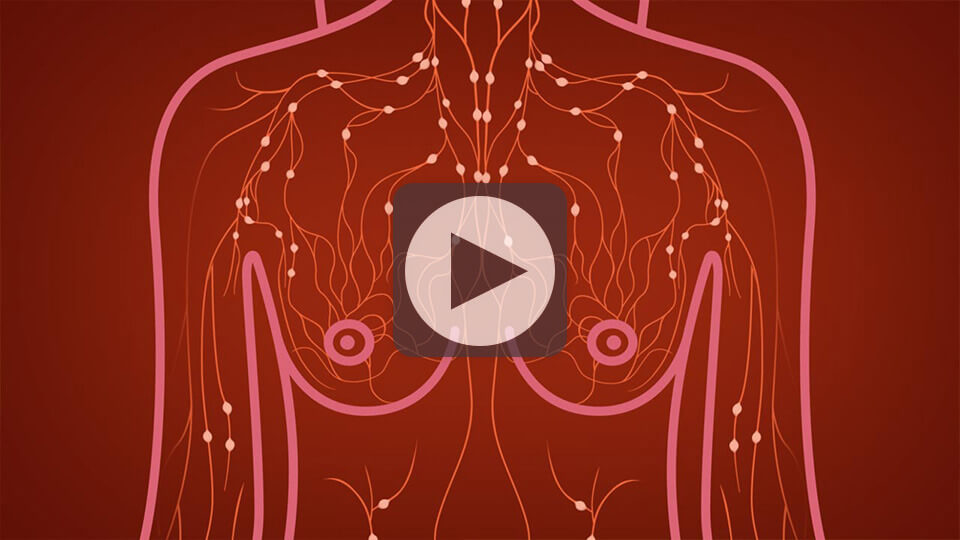 breast-anatomy-video